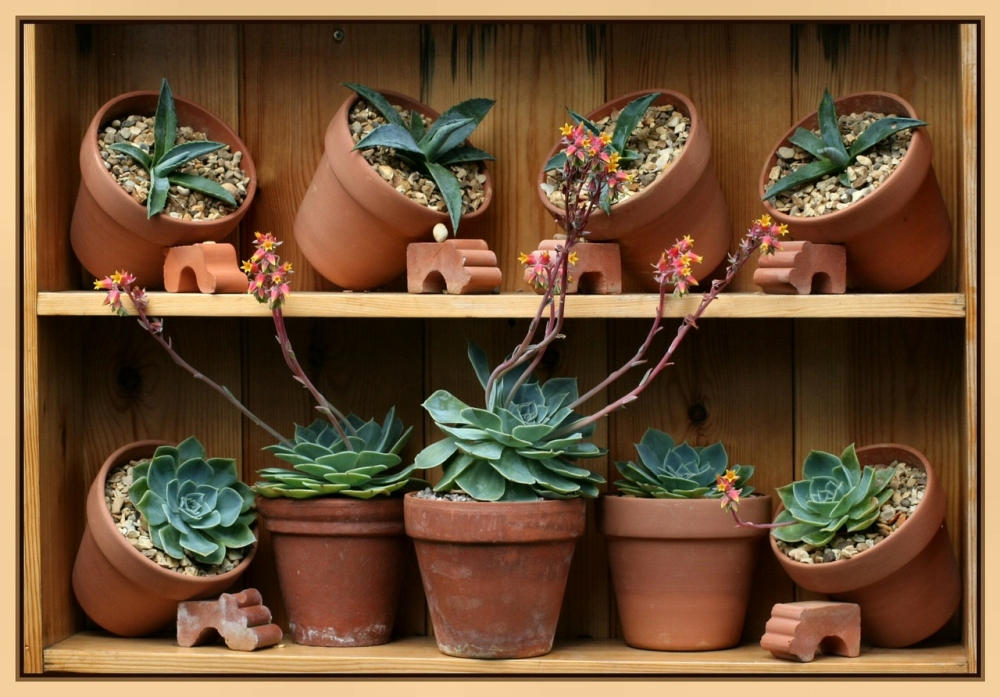 Succulents5.jpg