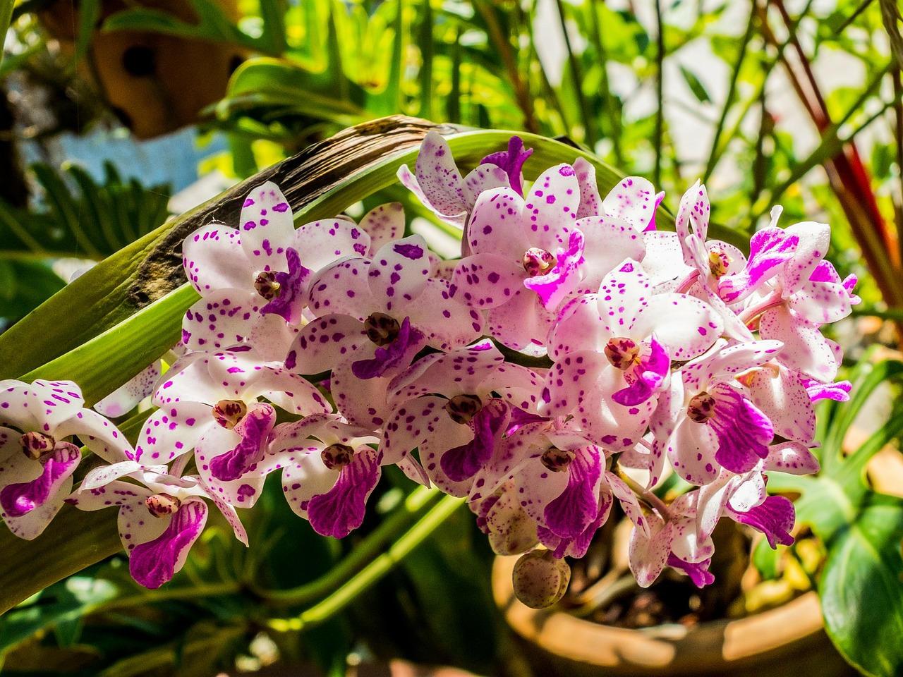 быть, разновидности орхидеи картинки и названия нас можно